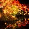 日光 逍遥園ライトアップと輪王寺夜間特別参拝