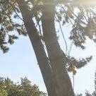 15日に氏神様に参拝して来たら太陽が喜んでいました!の記事より