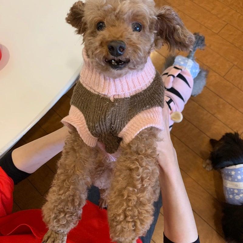 保護犬カフェ鶴橋店 人気記事 一般 アメーバブログ アメブロ