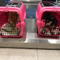 犬連れ宮古島旅行 Vol.① 〜出発・到着〜の記事に添付されている画像