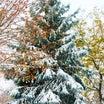 雪景色と今日も雪の森へ!♪♪