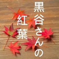 黒谷さんの紅葉の記事に添付されている画像