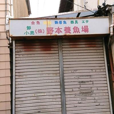 野本養魚場・琉金フェア2018☆☆☆の記事に添付されている画像