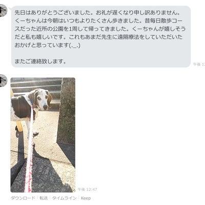 老犬の足のふらつき、歩行状態の改善報告の記事に添付されている画像