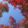 「ロウの花」秋の作品の画像