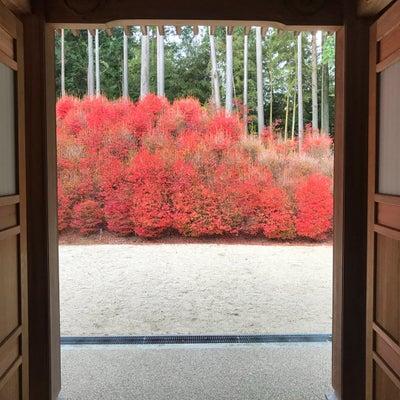 福岡おススメ紅葉スポットの記事に添付されている画像