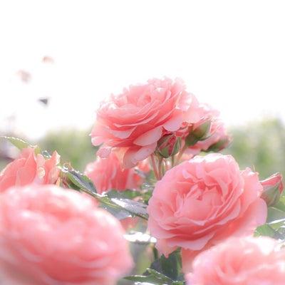 11月・12月のご予約最新状況♡~ソメイユ ド ランジュ~の記事に添付されている画像