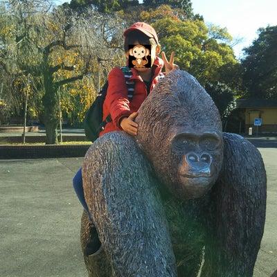 日本モンキーセンター楽しかったよ!の記事に添付されている画像
