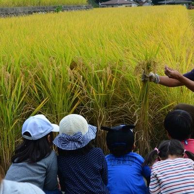 はらきっずプラス☆稲刈り体験の記事に添付されている画像