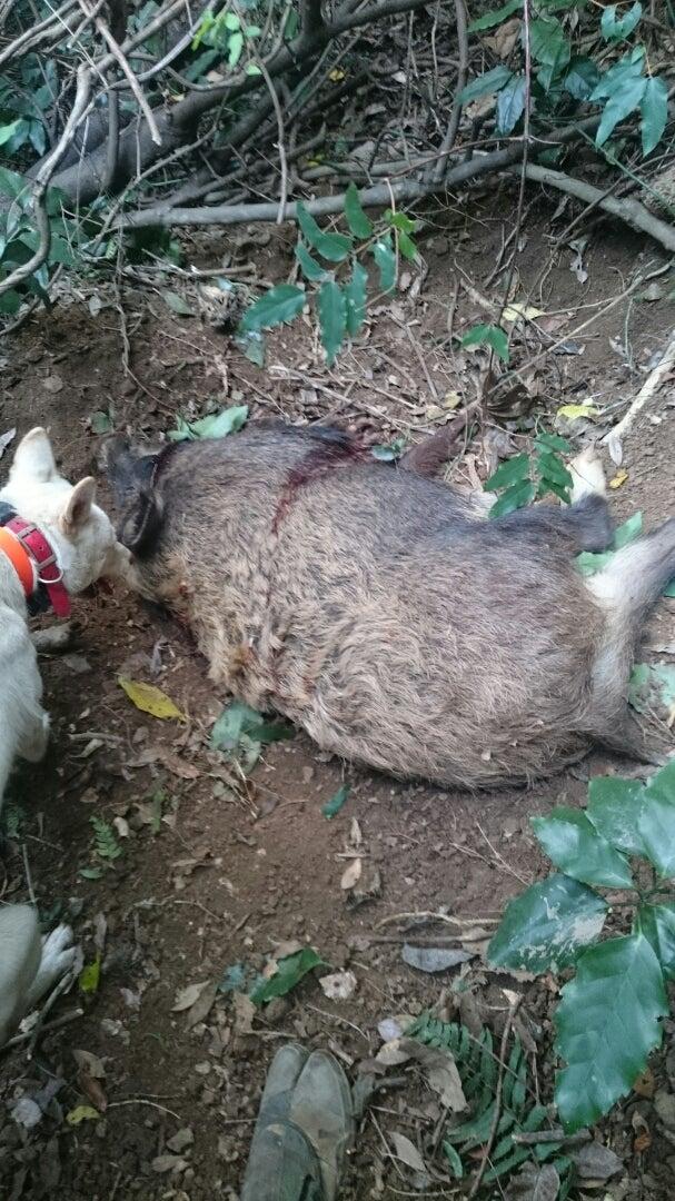 出猟 | 猪Tandokuの狩猟生活