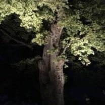 【2018年10月 ソウル】旅レポ15 ~ 昌徳宮「月明かり紀行」に参加③ ~の記事に添付されている画像