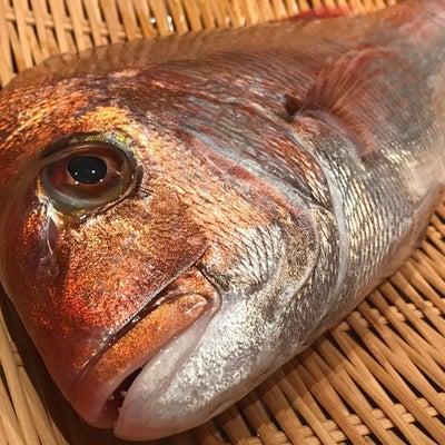 真鯛です!の記事に添付されている画像