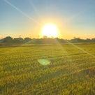 朝の陽を浴びると運気が上がる。エネルギーは伝播する!の記事より