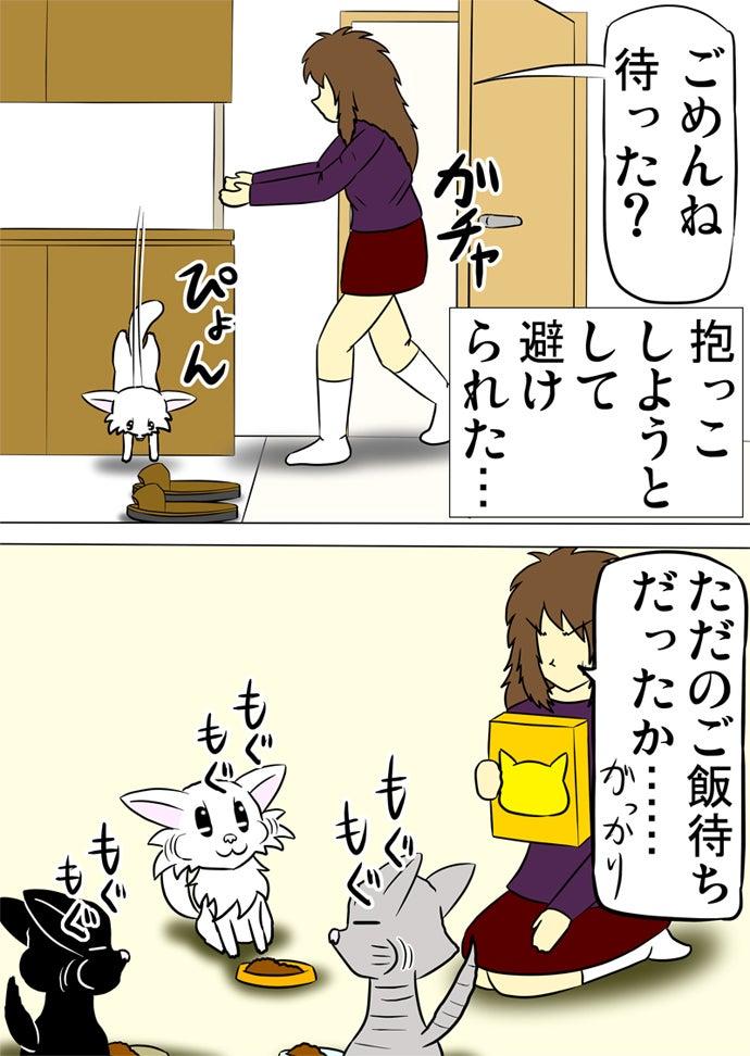 トイレから出てきて抱っこしようとしてくる女性の手を逃れて玄関の靴入れから飛び降りてキャットフードの箱を持った女性からオレンジ色の皿に盛ってもらったキャットフードを食べる白い子猫と水色の皿に盛られたキャットフードを食べるアメリカンショートヘア猫と薄い緑色の皿に盛られたキャットフードを食べる黒い子猫