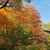 Photo Walk @ The Kobe Arboretumの画像