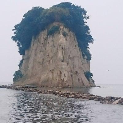 珪化木と珊瑚の記事に添付されている画像