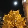 霜月の満月の画像