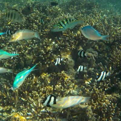 グアム旅行で大活躍!ニコンの防水デジカメ COOLPIX♡の記事に添付されている画像