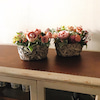 従姉妹会inくにたち~AKI FLOWERSさんの新アトリエへ~の画像