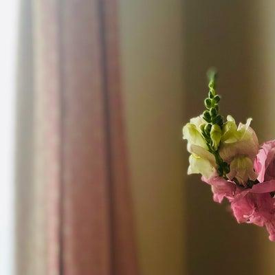 今日のお花の記事に添付されている画像
