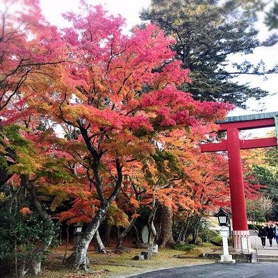 阿部宝生さんのブログをご紹介!の記事に添付されている画像