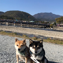 犬連れ京都小旅行 Vol.① 〜京都観光〜の記事に添付されている画像