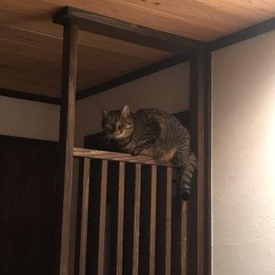 わが家の危機を救う猫。サムニャンは…アメリカンショートヘアか野良猫か。の記事に添付されている画像