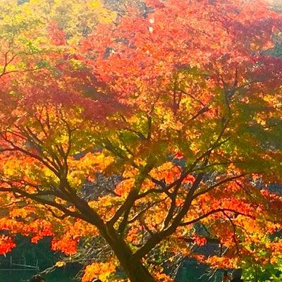 紅葉のように風流な、M姫の記事に添付されている画像