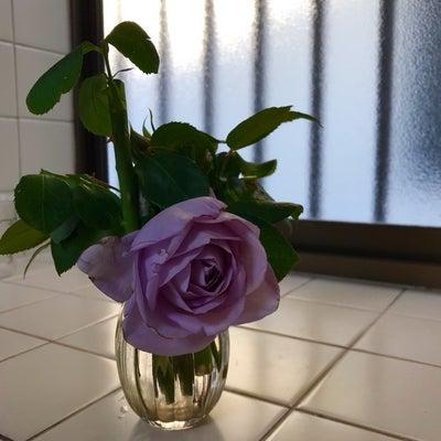 バラが好き?買うのが好き?の記事に添付されている画像
