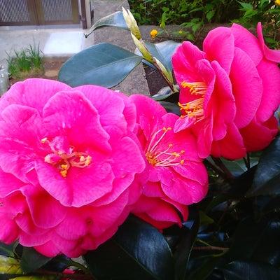 赤い花白い花の記事に添付されている画像