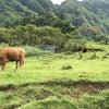 高千穂と阿蘇の旅6 高森殿の杉 健軍神社 水前寺公園の画像