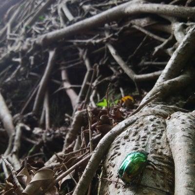 沖縄母子旅③の記事に添付されている画像