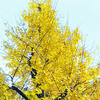 11月29日(木)ふくの日の画像