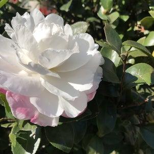 冬の花の画像