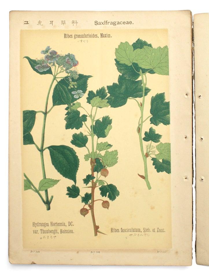村越三千男〈普通植物図譜〉 | mizusumashi-tei みずすまし亭通信