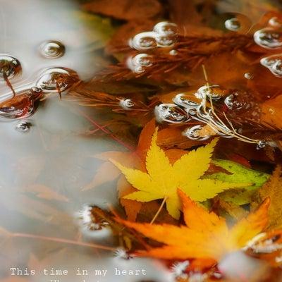 2018 私の好きな秋の色の記事に添付されている画像