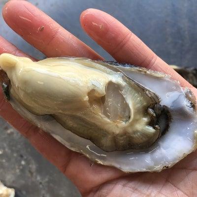 牡蠣の珍味 塩辛・キムチ・オリーブオイル漬け・ペーストの記事に添付されている画像