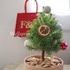 かわいいクリスマスツリーの画像