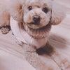 我が家の癒し、愛犬の画像