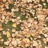 12月の各種カラー養成講座のお知らせ♪の画像