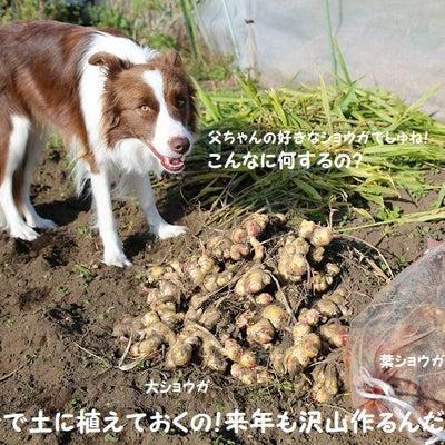 白菜大好きだも~ん♪良く食べるよな(汗)☆の記事に添付されている画像