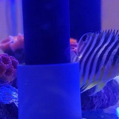水換えとシマさん水槽丸洗いの巻♪ 12/04の記事に添付されている画像