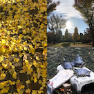 秋、ほのぼの日和の記事より