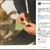 ■手作り犬ごはんと犬たちのリアクション(大阪犬ごはん教室レポ④)の画像