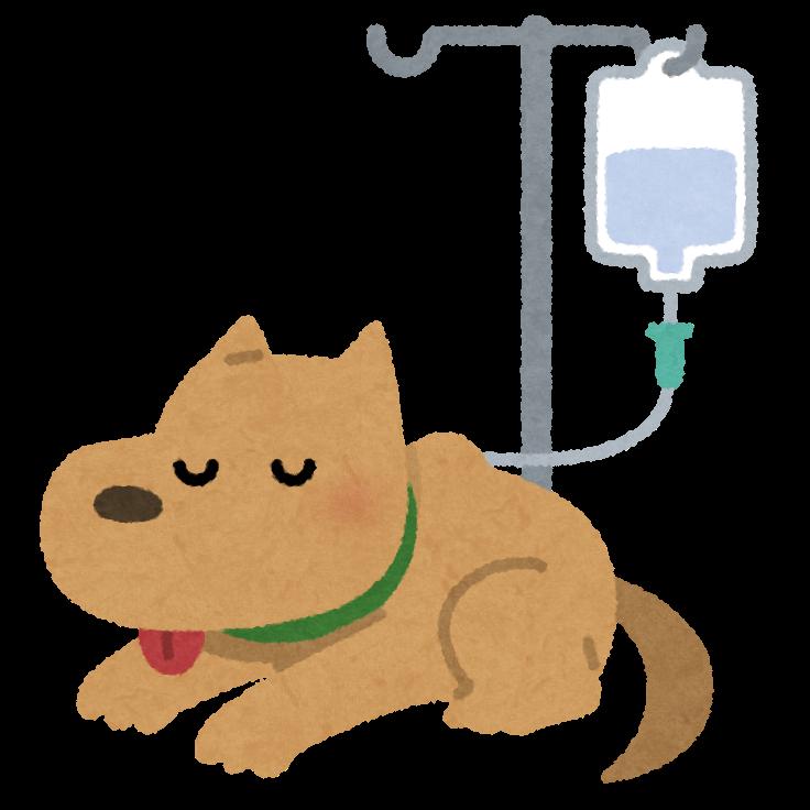 不全 末期 腎 犬