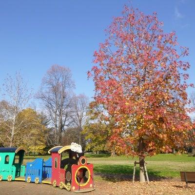 12月4日小金井公園 ゆりの木広場の紅葉とつつじ山広場のドウダンツツジの記事に添付されている画像