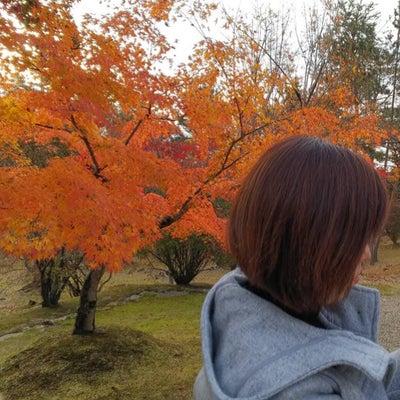 色彩美しい仁和寺への記事に添付されている画像