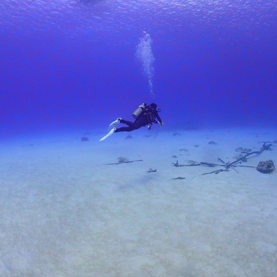 Saipan diving サイパンブルーに感激!Saipan blue3️⃣の記事に添付されている画像