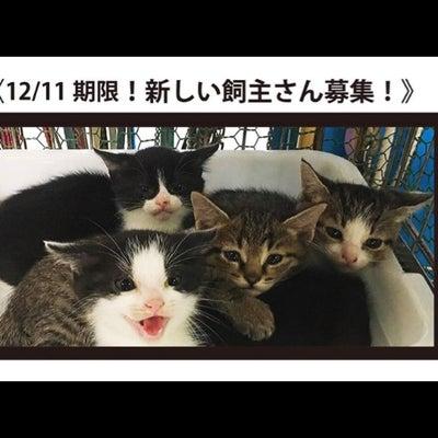 """預かりさん決定""""12/11期限!子猫の新しい飼い主さん募集!!""""の記事に添付されている画像"""