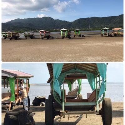 西表島家族旅行 完 & 我が家のわんこ達の記事に添付されている画像